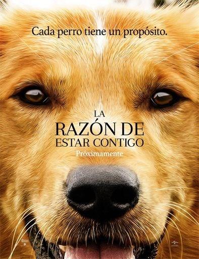 Poster de:1 La Razon De Estar Conti
